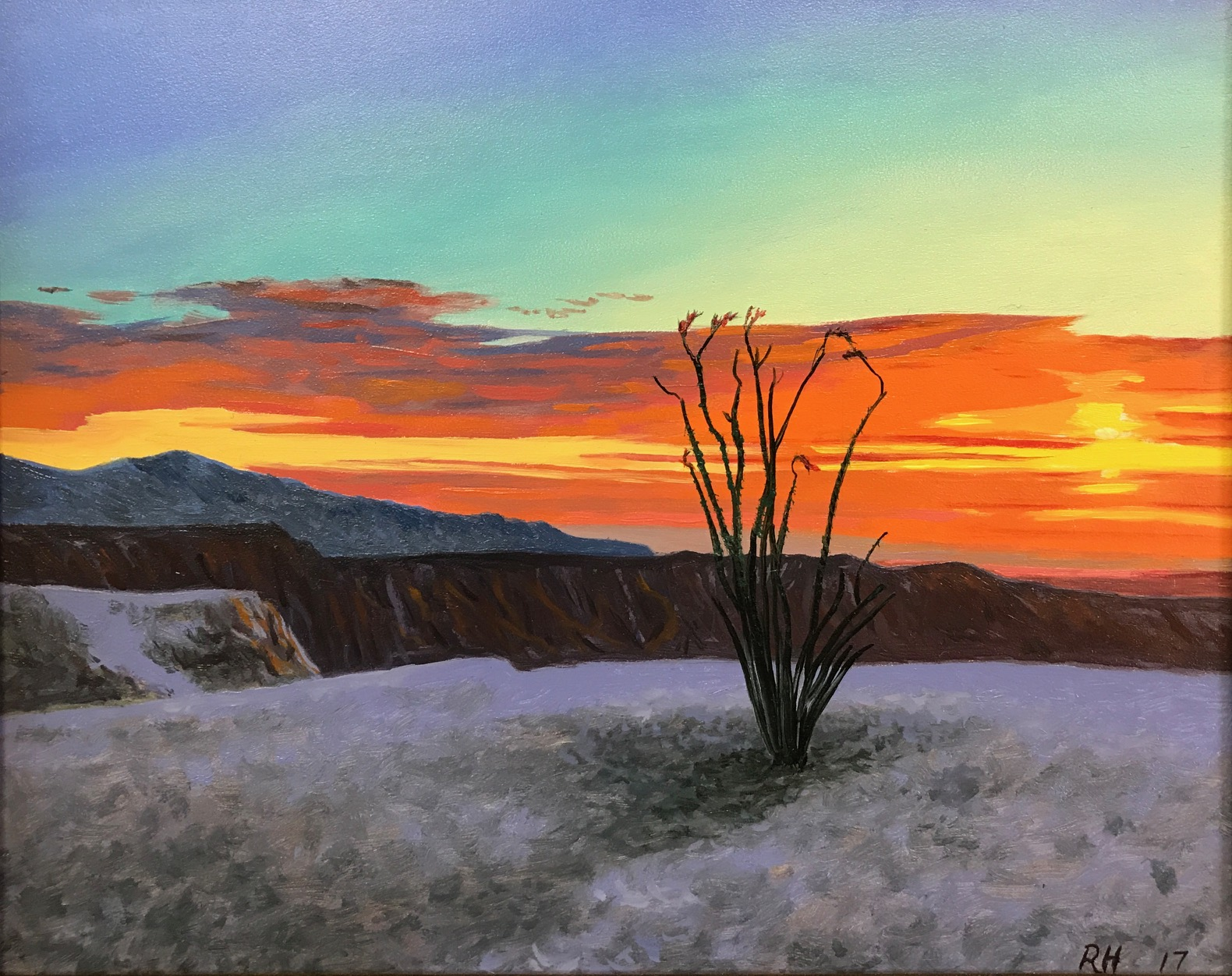 Sunrise Ocotillo