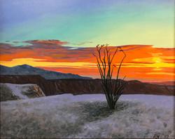 Sunrise Ocotillo