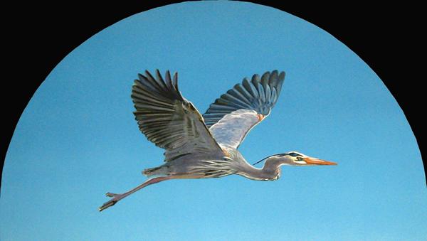 Heron detail France
