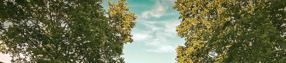 Blauer Himmer mit Baumkronen.jpg
