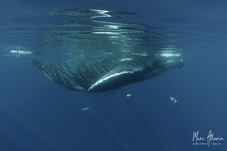Baleine6.jpg
