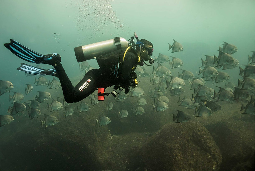 scuba-diving-alcatrazes-brazil.jpg