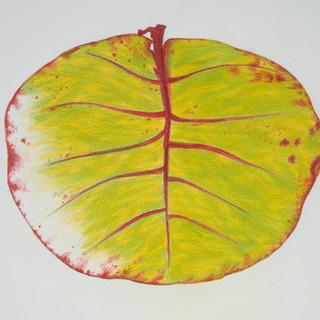 yellow green leaf.jpg