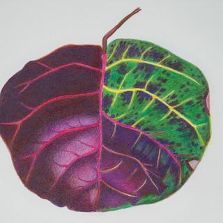 purple leaf.jpg