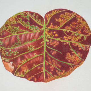 burnt sienna leaf.jpg
