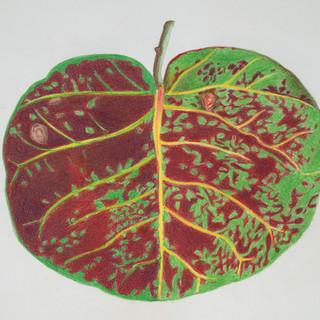 kelly green red brown leaf.jpg