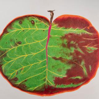 green red pink leaf.jpg