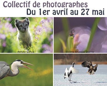 Expositions à Yvetot en Seine Maritime.