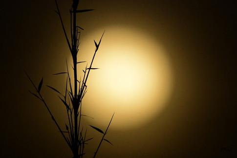 Lune rousse