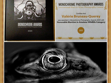 Mention honorable au concours international Black and White MONOCHROME AWARDS 2020