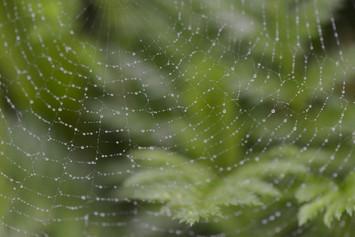 Toile d'araignée par jour de pluie
