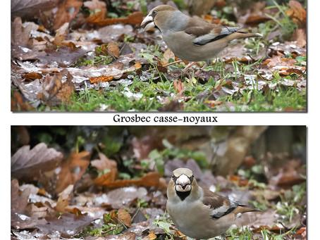 Une année à Grosbec casse-noyaux