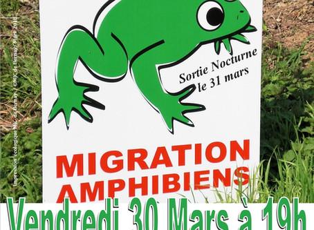 Conférence sur les amphibiens
