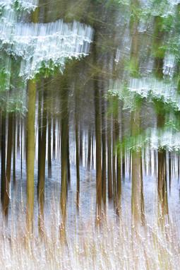 Forêt enneigée