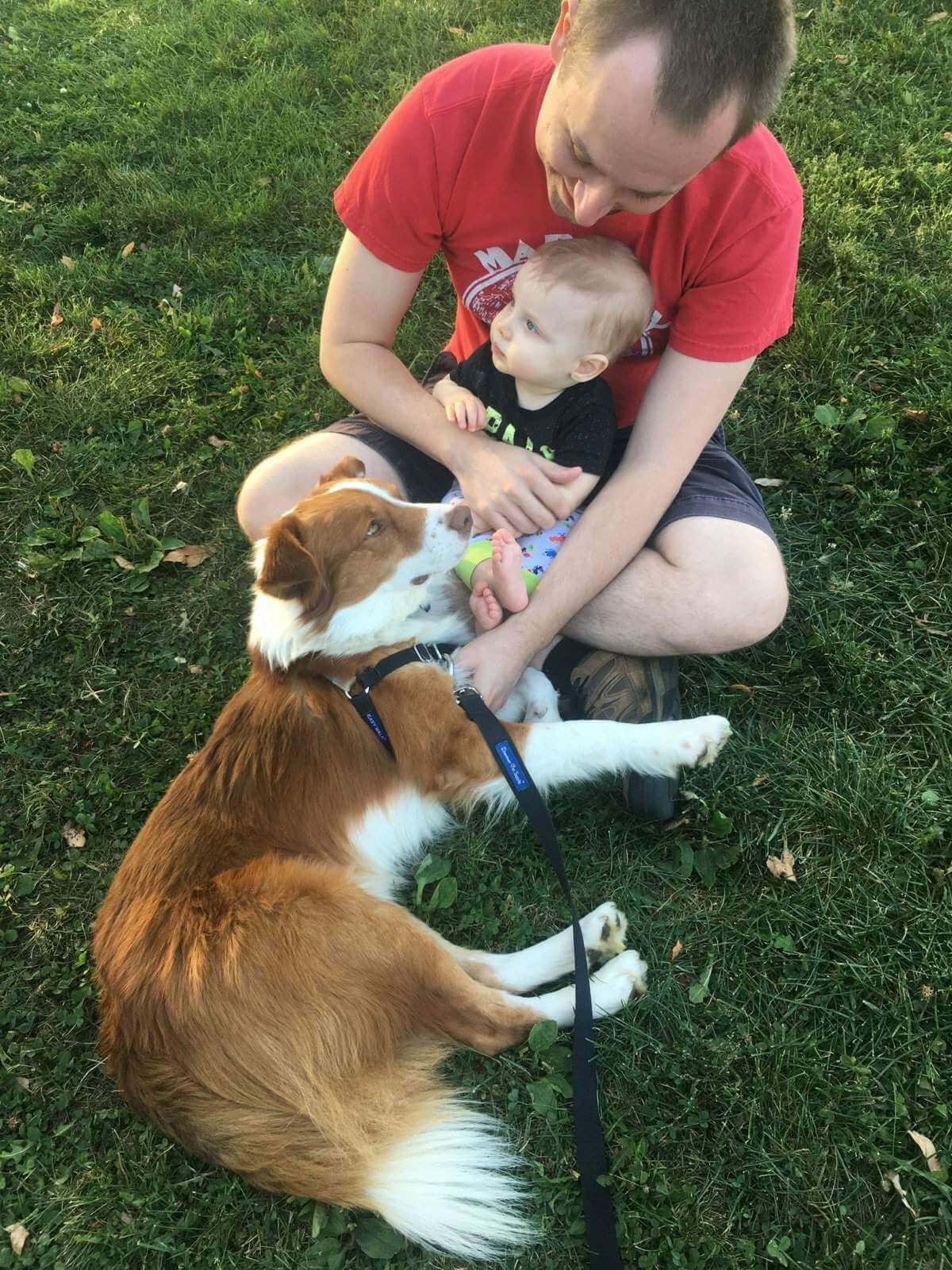 underdog pet rescue of wisconsin happy tails