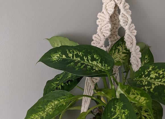 'Fae' Plant Hanger