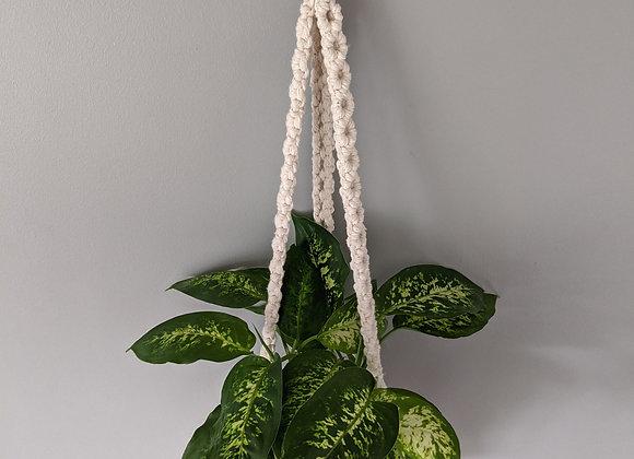 'Pothos' Plant Hanger