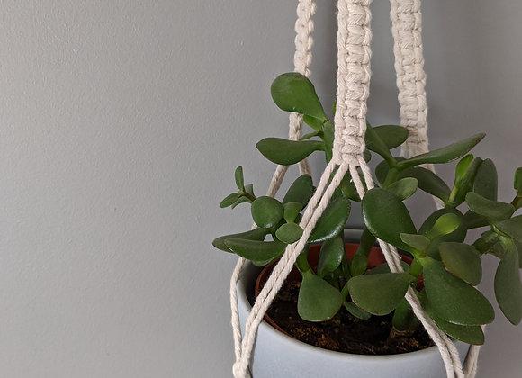 'Fern' Plant Hanger