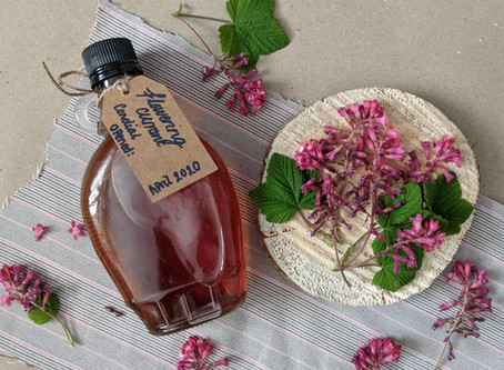 Flowering Currant Cordial Recipe