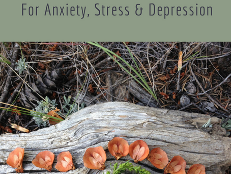 5 Nature Inspired Activities for Stress, Depression & Anxiety