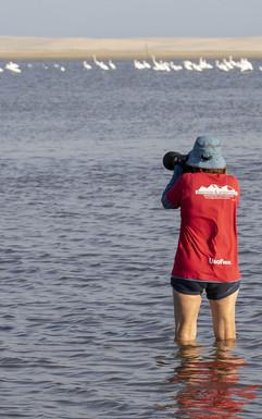 Expedição Fotográfica Santuário das Aves