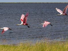 Santuario das Aves