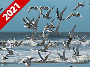 Expediçao Fotográfica Santuário dos Pássaros
