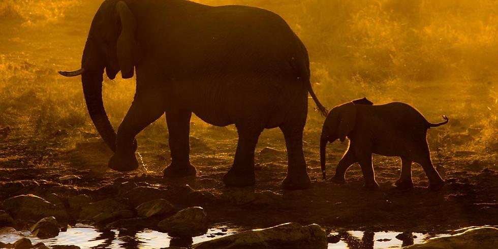 Expedição Fotográfica Namíbia e África do Sul 2020