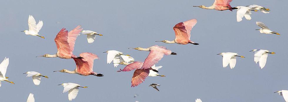 santuario-das-aves.jpg