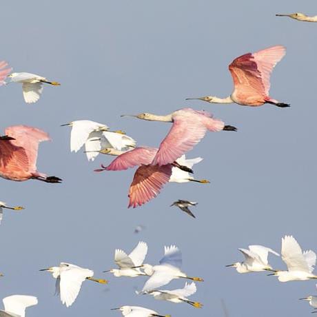 Expedição Fotográfica Santuário dos Pássaros