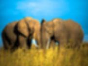 Namíbia e Africa do Sul - Expedição Fotográfica