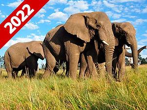 Expedição Fotogrfica Gabão 2022