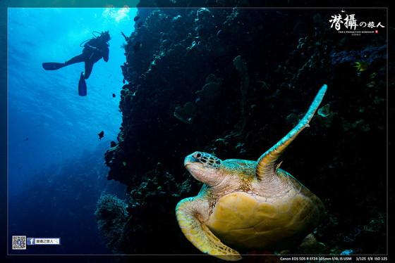 《布納肯島》的藝海龜山(下)