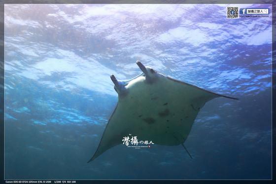 《達拉灣群島》大魚國見聞錄(2):聖加拉奇