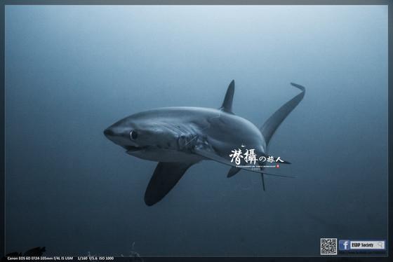 《馬拉帕斯卡》轉角遇見長尾鯊(下)