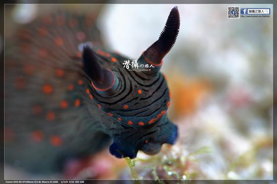 《達拉灣群島》大魚國見聞錄(4):達拉灣