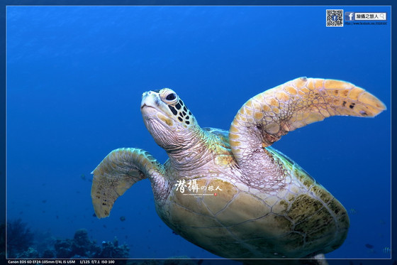 《達拉灣群島》大魚國見聞錄(3):瑪拉圖亞