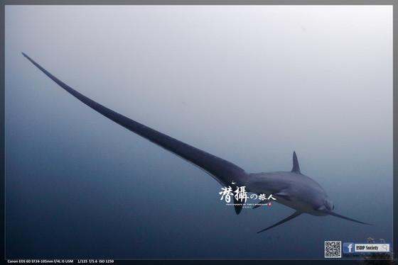 《馬拉帕斯卡》轉角遇見長尾鯊(上)