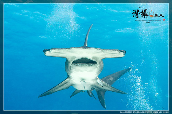 決戰加勒比海鯊魚王!《比米尼》(上)