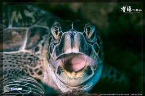 《布納肯島》的藝海龜山(上)