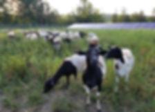 summer hello on solar pasture