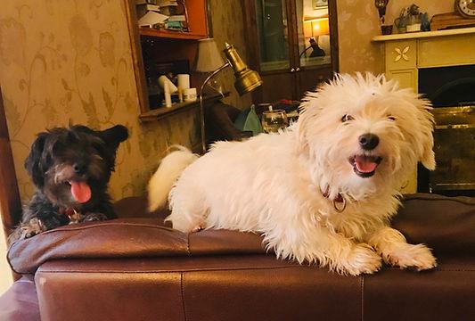 Dog friendly B&B, hotel, guesthouse