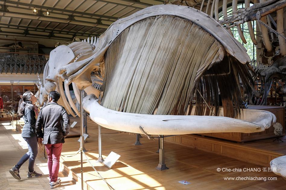 Galerie de Paléontologie et d'Anatomie c