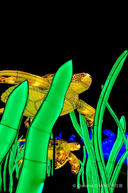 Océan en voie d'illumination-10