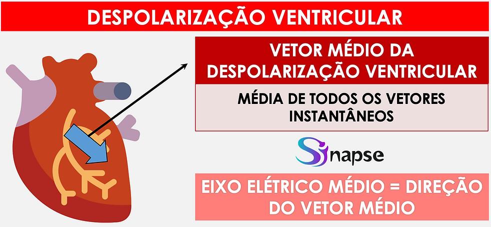 Despolarização_Ventricular.png