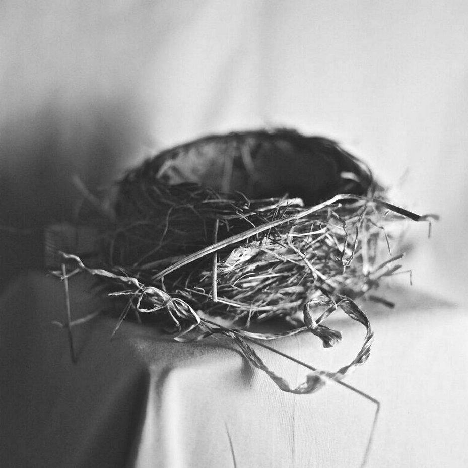 Nest.jpeg
