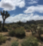 Such a lovely day in Joshua Tree! Gratef