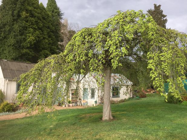 Hillandale Garden
