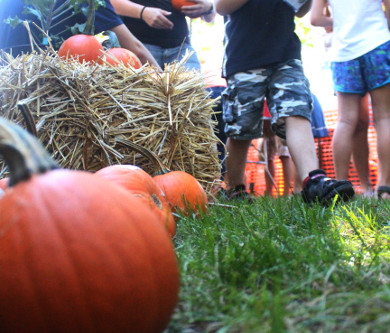 Fall Fest & Fundraising at Homewood Science Center
