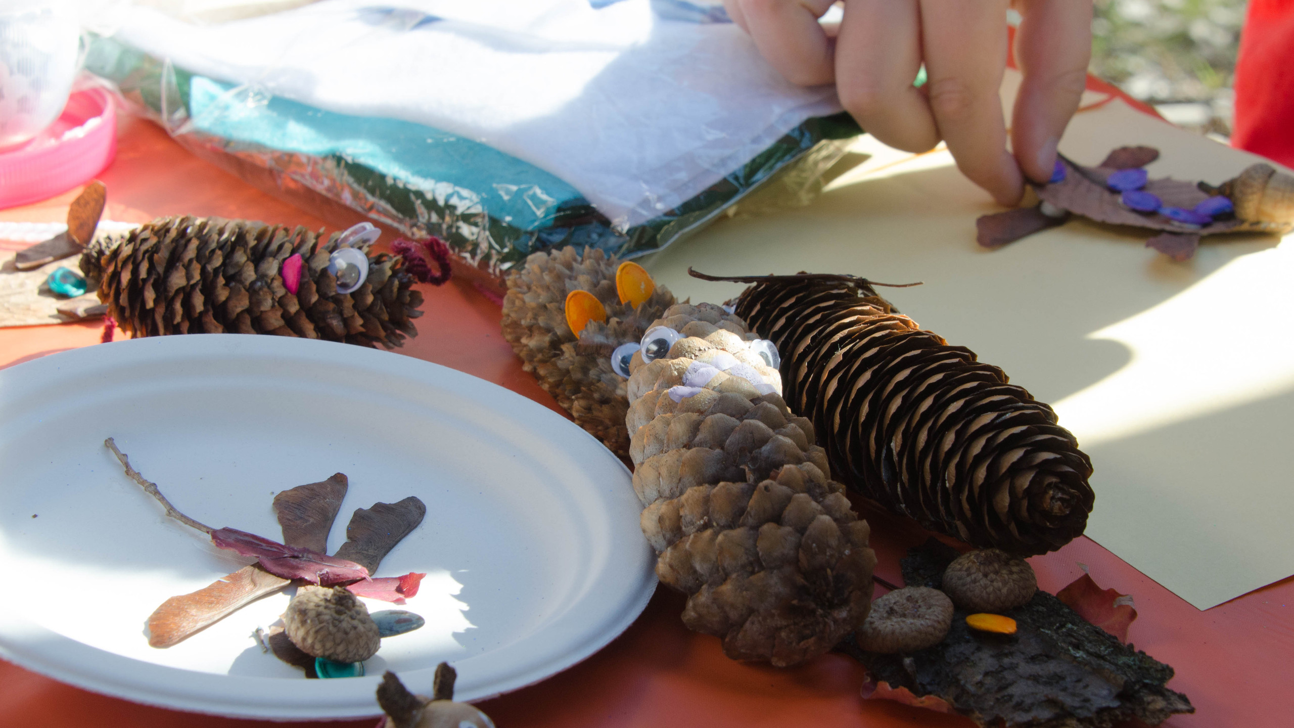 Pine cone critters